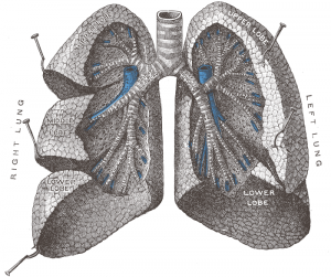 6 Things You Need to Know Before Becoming a Respiratory Therapist