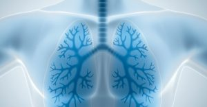 respiratory lungs
